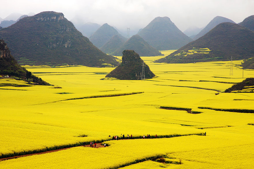 Flori de canola, China
