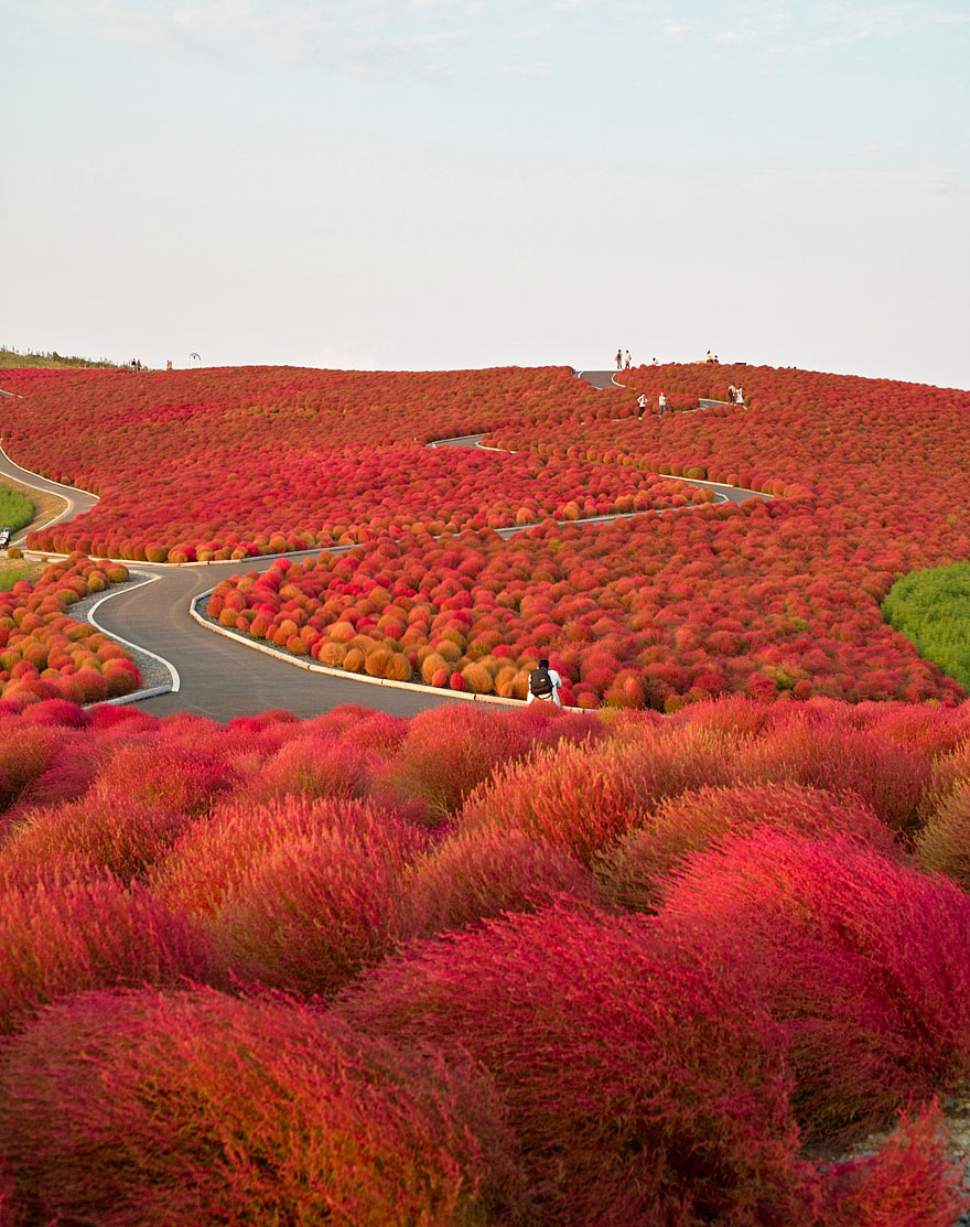 Hitachi Seaside Park, Japonia